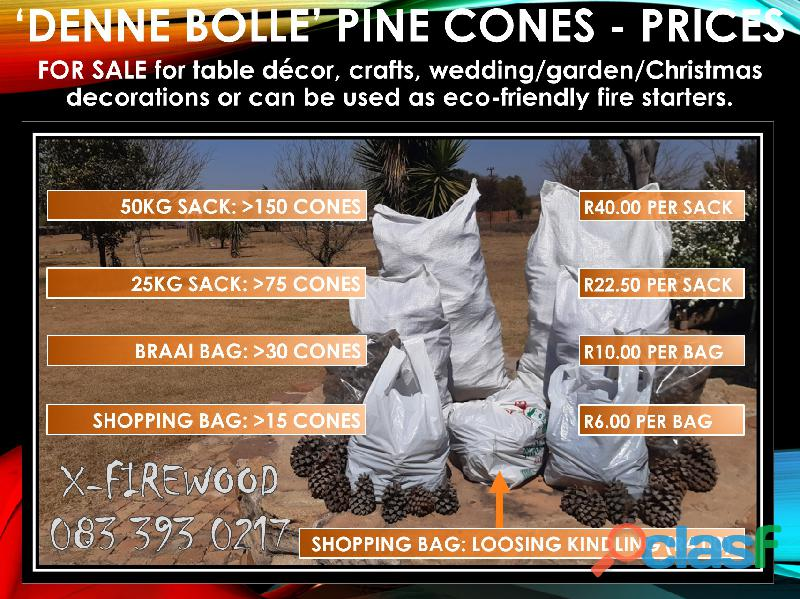 Pine cones package (denne bolle species)