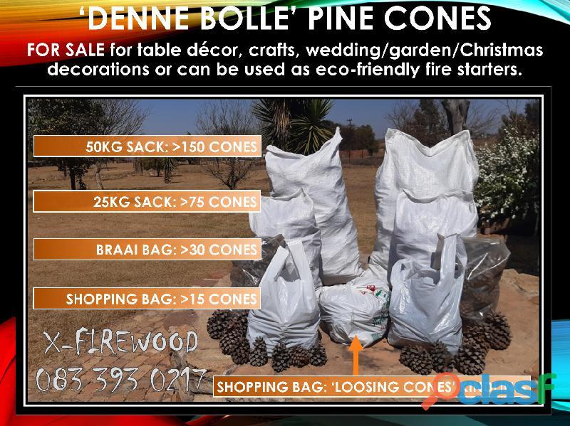 Pine Cones Package (Denne Bolle Species)
