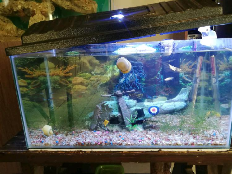 Fresh water tropical fish tank for sale