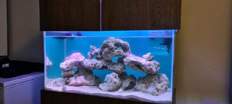 Marine salt water tank