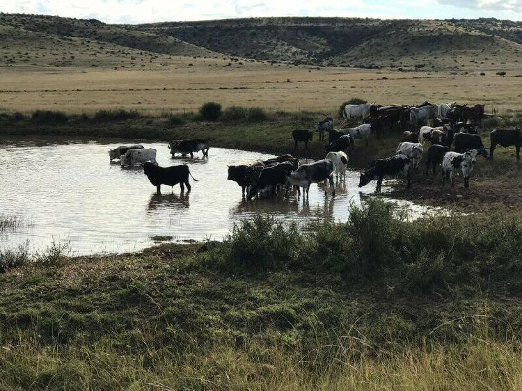 NGUNI - Ad posted by adele