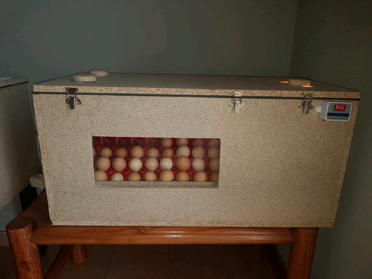 Incubator/hatcher for sale