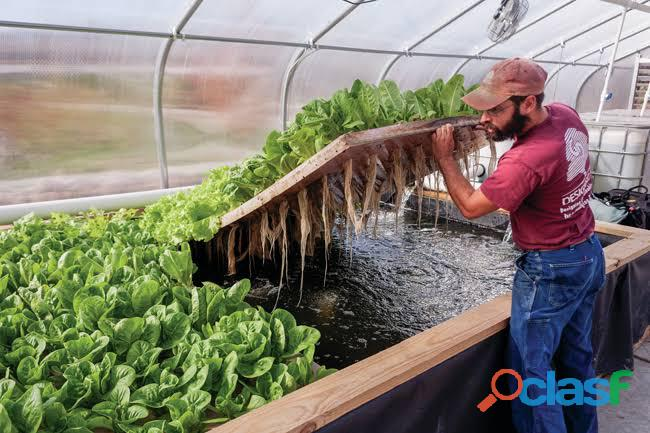 Commercial aquaponics service provider wanted in gauteng.