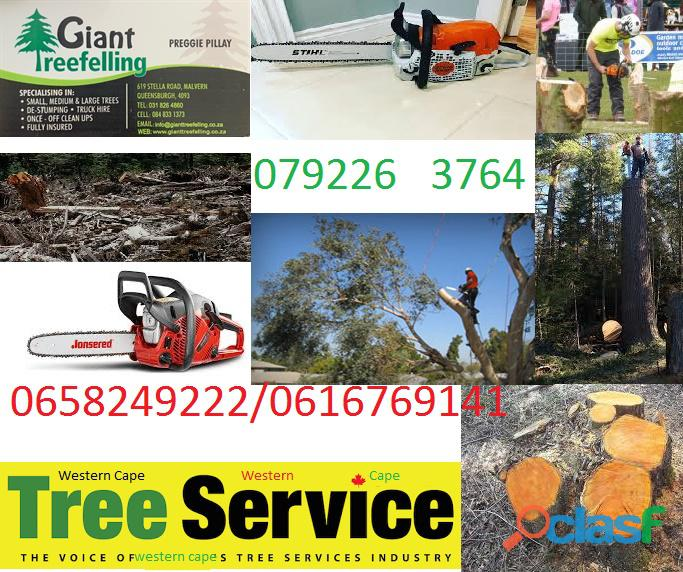 Tree felling landscaping & gardening services