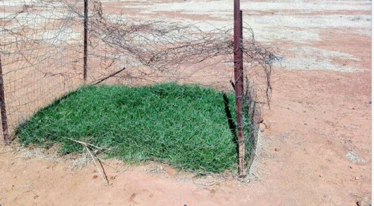 Farmers a fantastic indigenous pasture grass mix is now