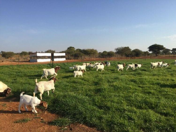 Pasture grass mix for sheep and all farm animals