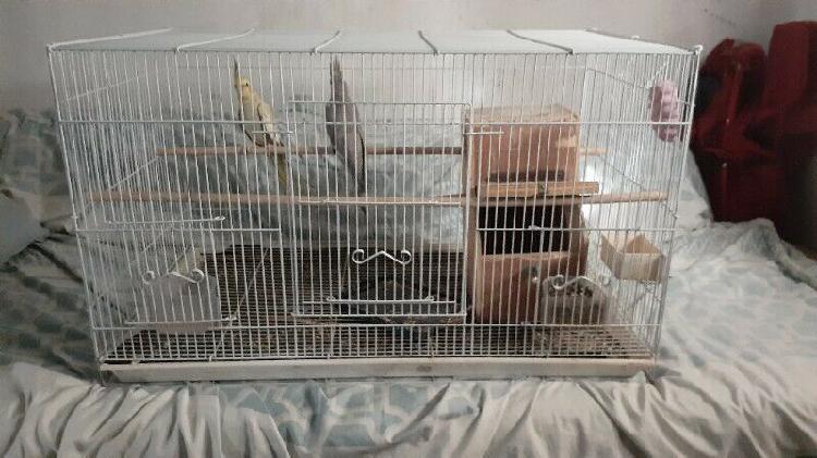 Bird cage - plus two cockatiel birds