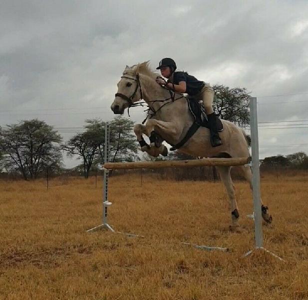 Schoolmaster pony for sale