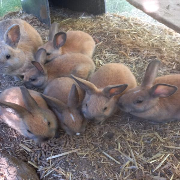 Baby rabbits to loving homes