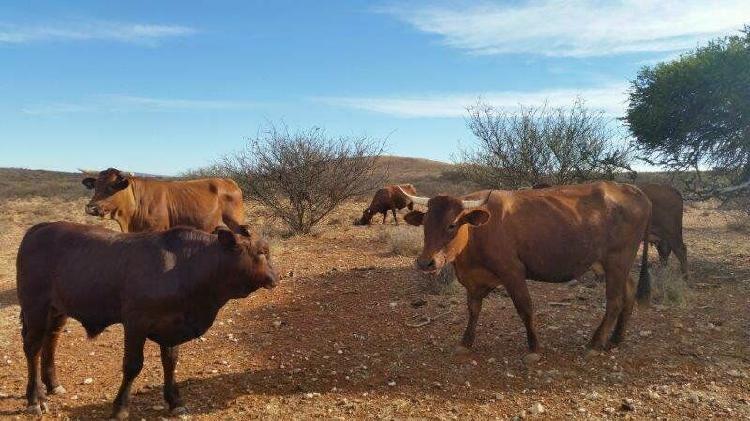Marydale: summer rainfall livestock farm...