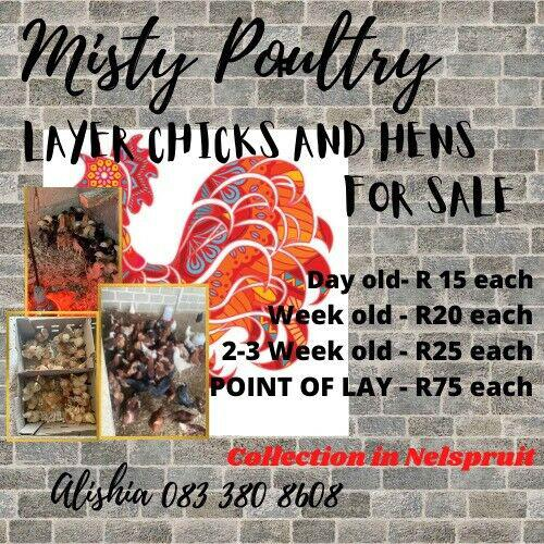Point of lay hens and day old chicks for sale
