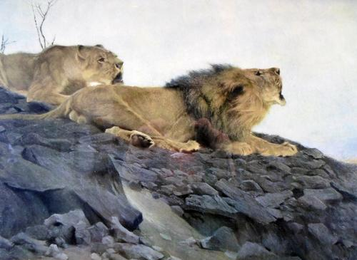 Vintage print - lions - very old frame - own this special