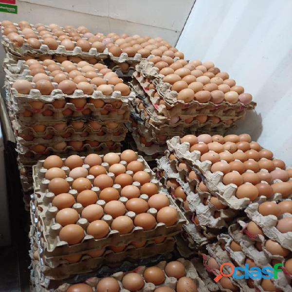 Farm fresh chicken eggs available .