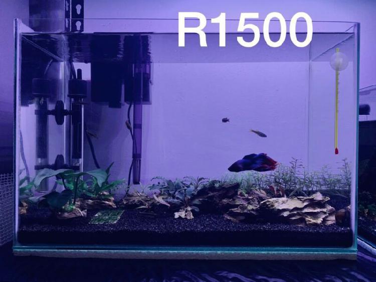 Aquarium Set and Accessories For Sale
