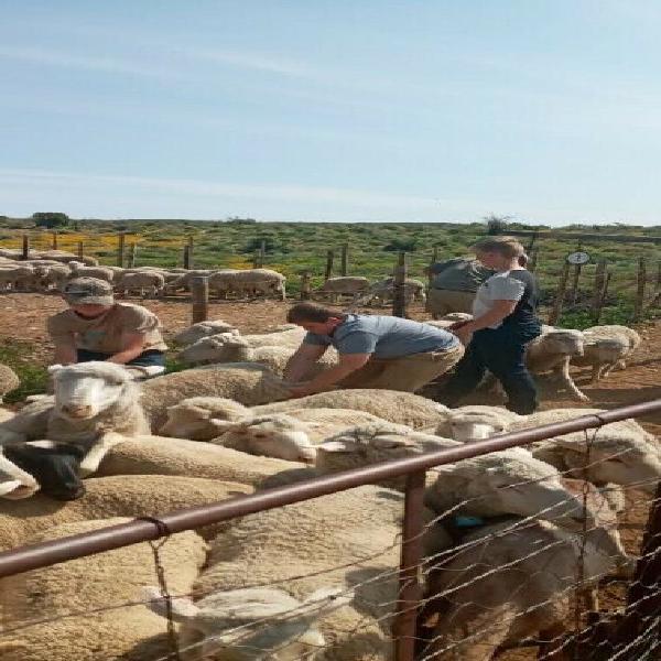 Livestock western cape