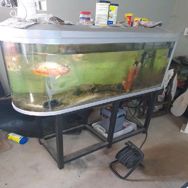 Freshwater fishtank