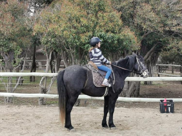 Super tame nooitgedacht pony gelding