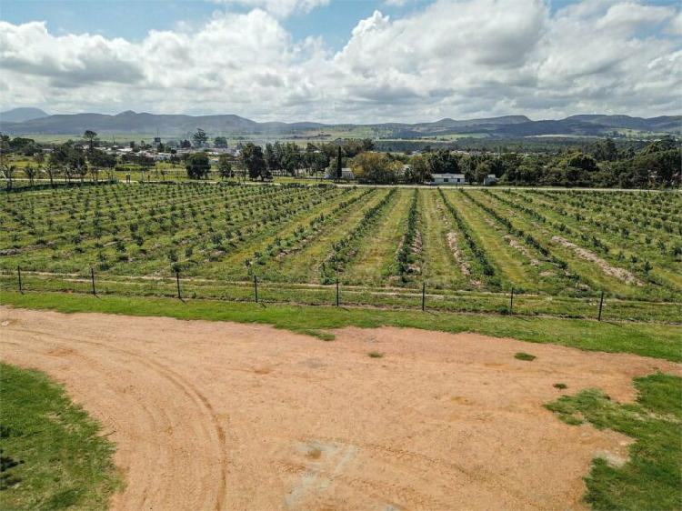 Thornhill 70ha farm plus restaurant and 6 bedroom house for